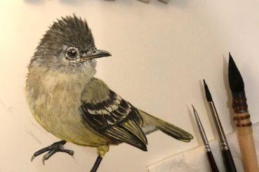 pássaro-workshop-aquarela-mariana-prestes-eleone