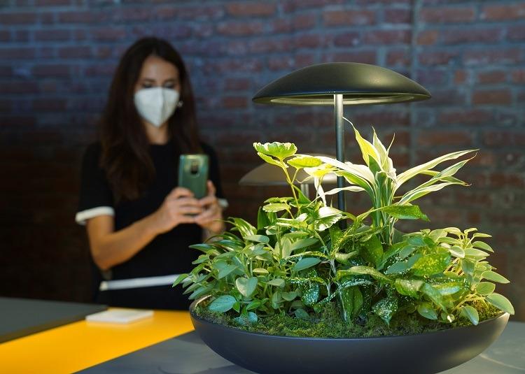 Luminária com jardim de mesa