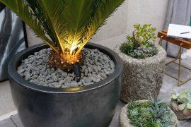 planta-suculentas-eleone-prestes
