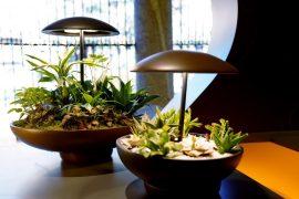 Luminária com Jardim